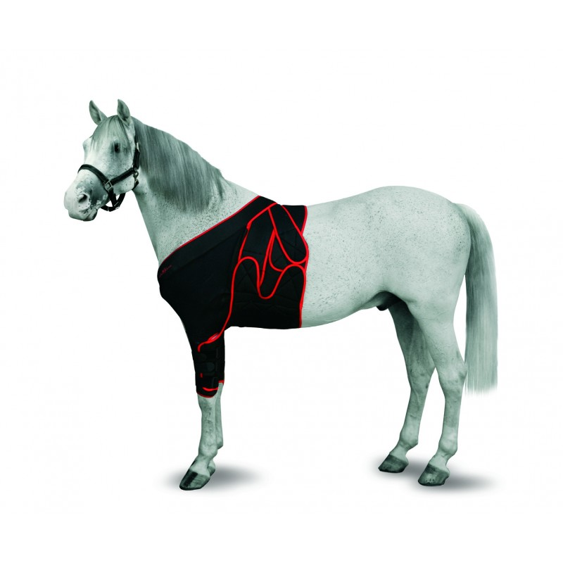 Jorgy Foal Frontal Chest Bandage Medium