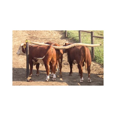 Cattle Back Rubbers